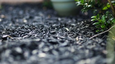 Gardening Tips: Mulch & Soil Health