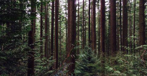 Wildlife Conservation Forest