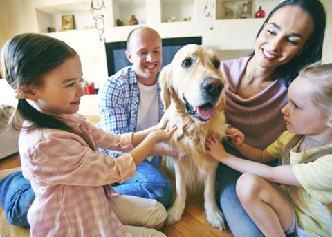 Microbes In The Home