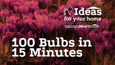 100 Bulbs In 15 Minutes